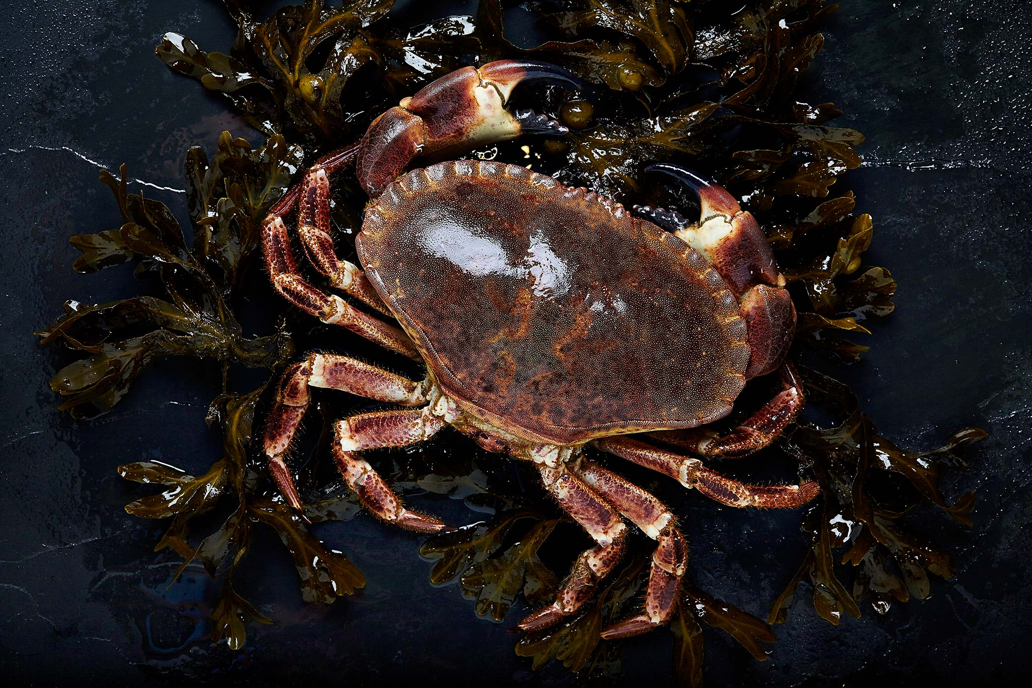 Fresh Crab, The Hebridean Food Company, Glasgow food photographer