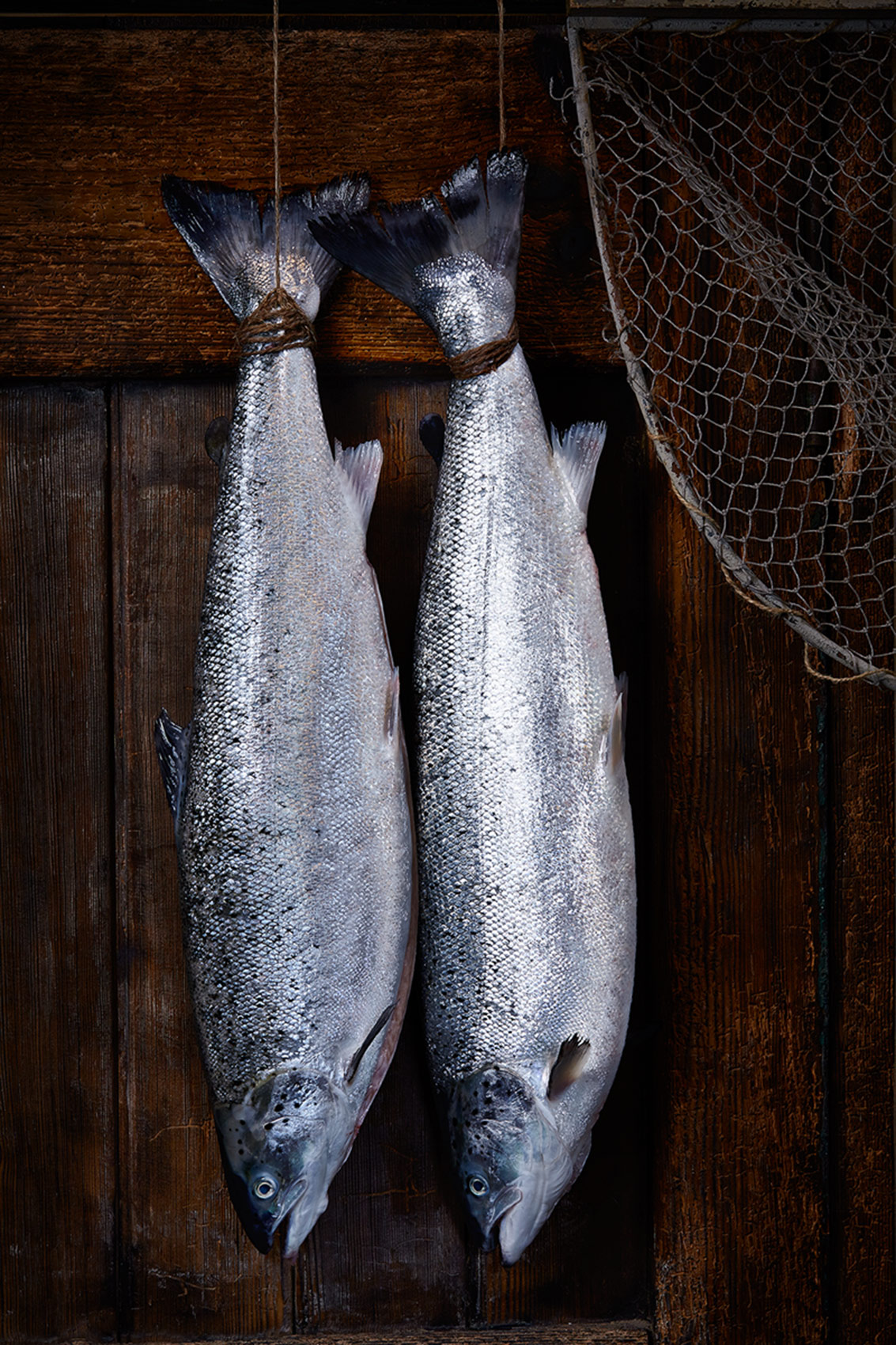 Freshly caught Loch Duart Salmon, Edinburgh food photographer